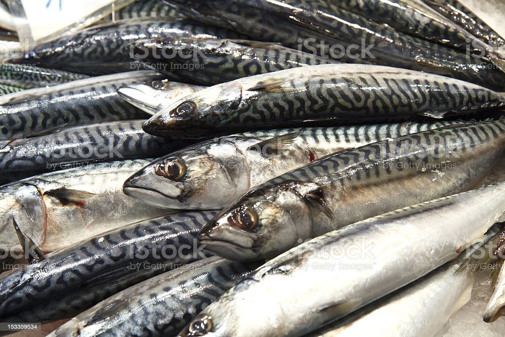 DSLR image of Mackerel at a fish monger royalty-free stock photo
