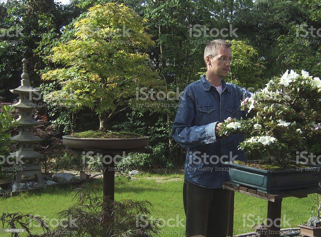 Bild Von Mann Stutzen Bonsaibäume Im Japanischen Garten Stock