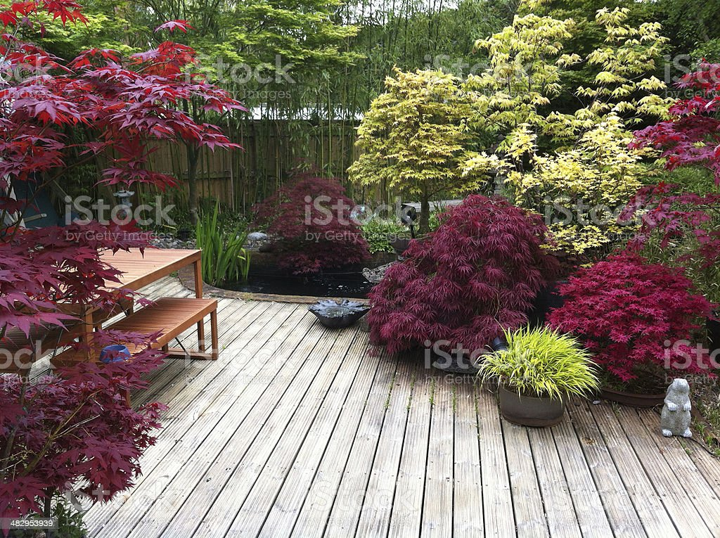 Image of maples in a domestic garden stock photo