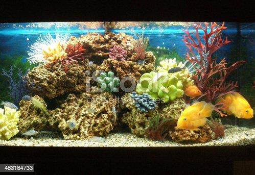 istock Image of marine effect tropical aquarium with parrot cichlid fish 483184733