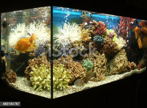 istock Image of marine effect tropical aquarium with parrot cichlid fish 483184787