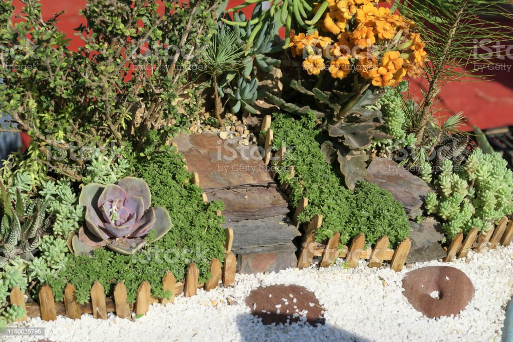 Image Of Miniature Garden Landscape For Children In Shallow Bonsai