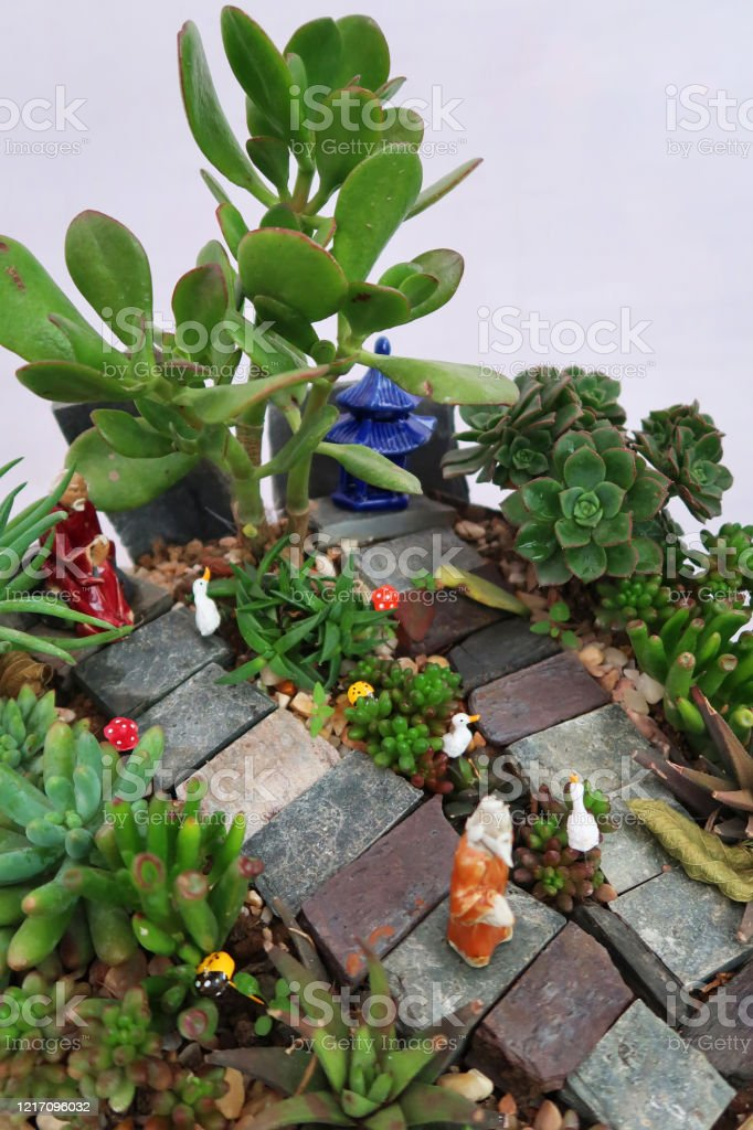 Image Of Miniature Garden Landscape For Children In Shallow Bonsai Pot Tray Dish Flowering Alpine Plants Succulents Cactus Gravel Dolls House Ornaments Mini Garden Fence Steps Small Slate Stones Outdoor Family Gardening