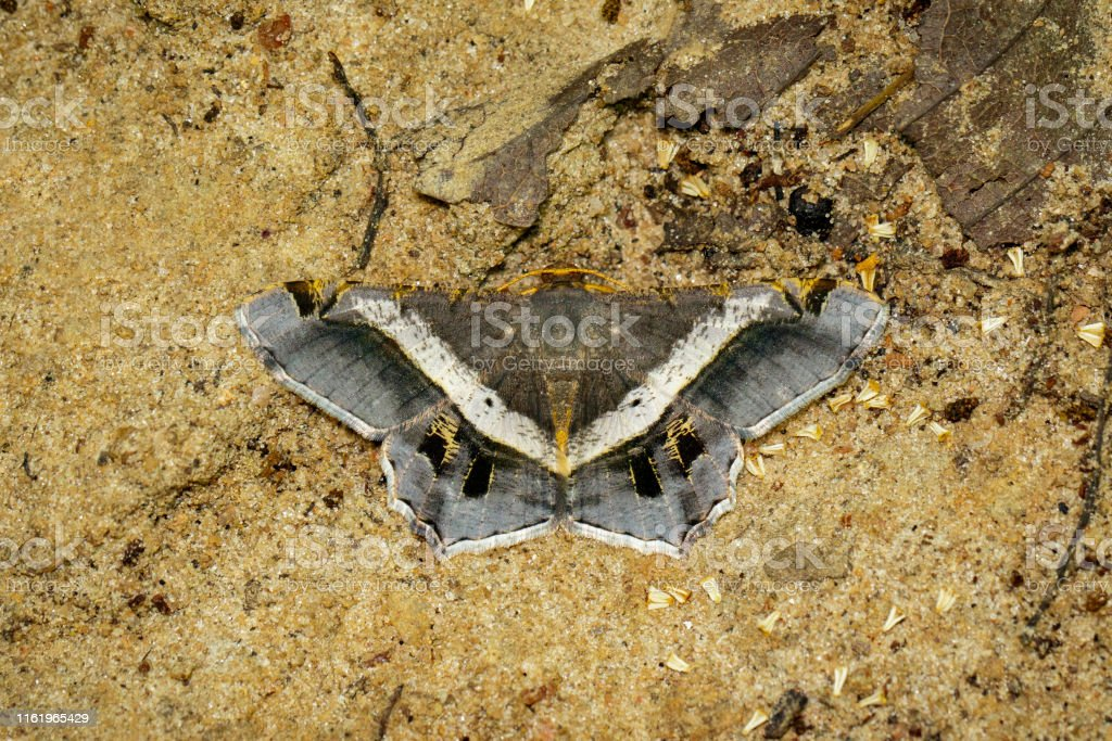 Image of moth or butterfly on the ground. Insects. Animals.