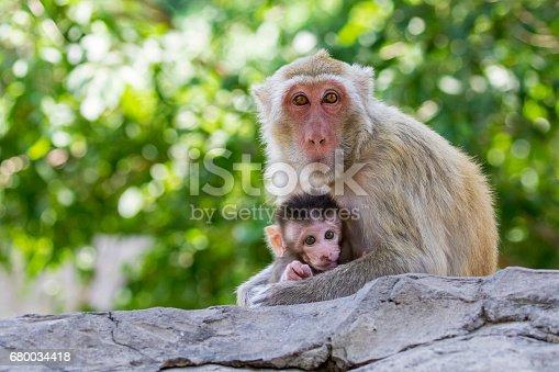 Image of mother monkey and baby monkey on nature background. Wild Animals.