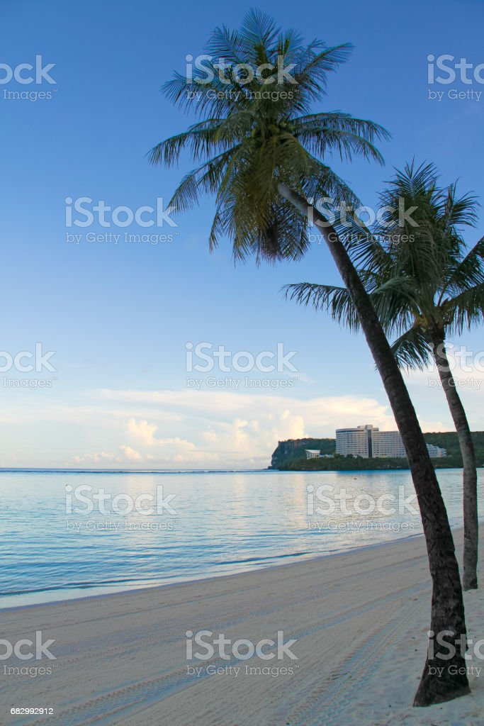 Image of nice palm trees in the blue sunny sky royalty-free stock photo
