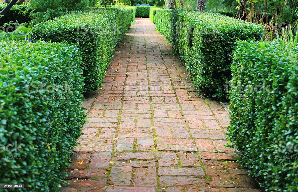 Image of old red brick pathway, clipped boxwood / buxus hedging stock photo