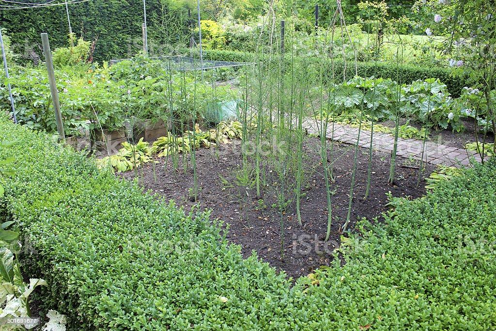 Imagem de legumes de jardim ornamental/paredes horta, aspargos plantas - foto de acervo
