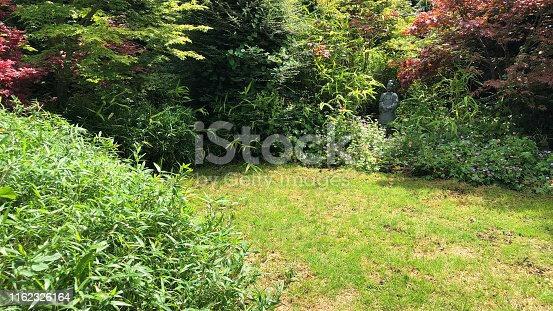 Stock photo of patchy mossy garden lawn grass and shrubs with weeds, dead patches of brown grass and moss, sunny and shade overgrown lawn needing to be mown with lawnmower, reseeded with grass seed for shady lawns, and weed and feed weedkiller / fertiliser