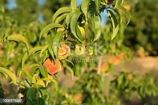 istock Image of peach fields 1006575382