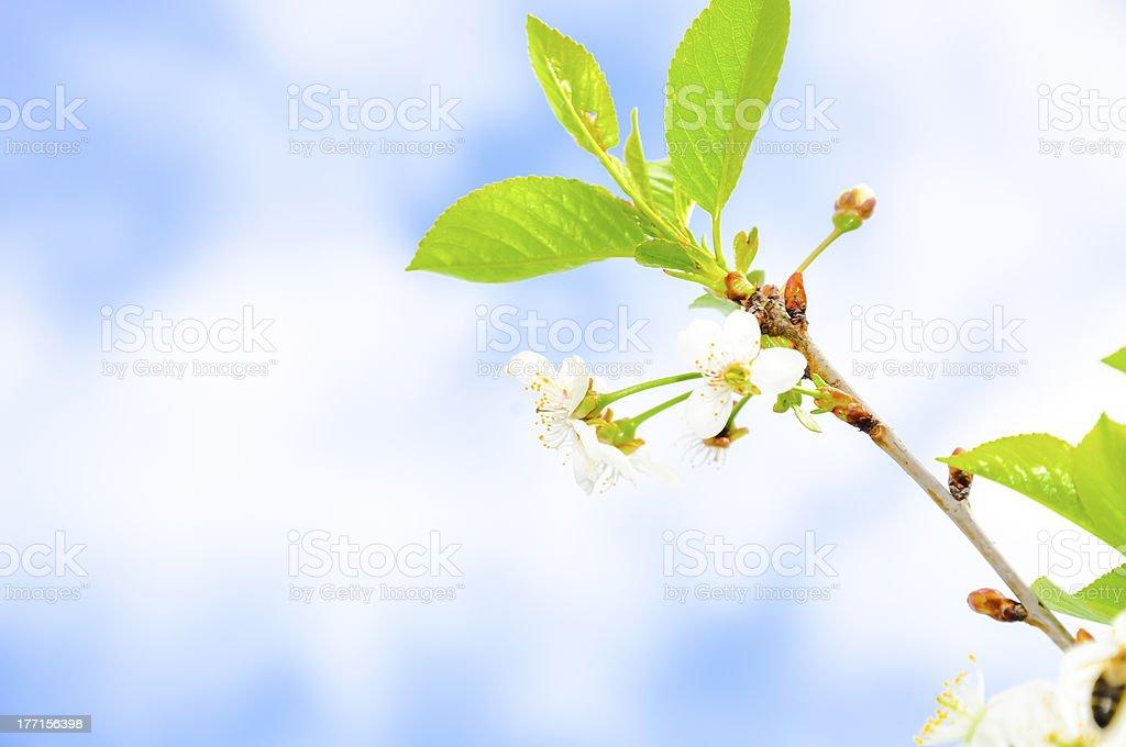 Image of plant royalty-free stock photo