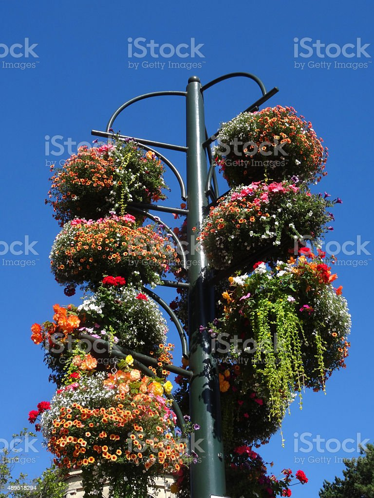 Image of pole with multiple summer hanging baskets, trailing flowers stock photo