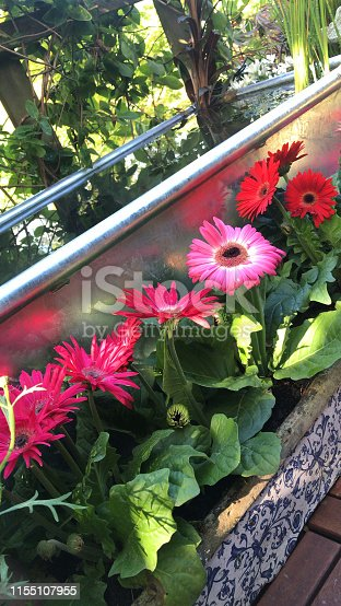 Stock photo of raised garden pond in silver metal zinc agricultural galvanised cattle trough water feature with goldfish fish and comets, red and pink flowering gerbera in sunshine and shade, solar powered lights / lighting, flower pots on patio in summer