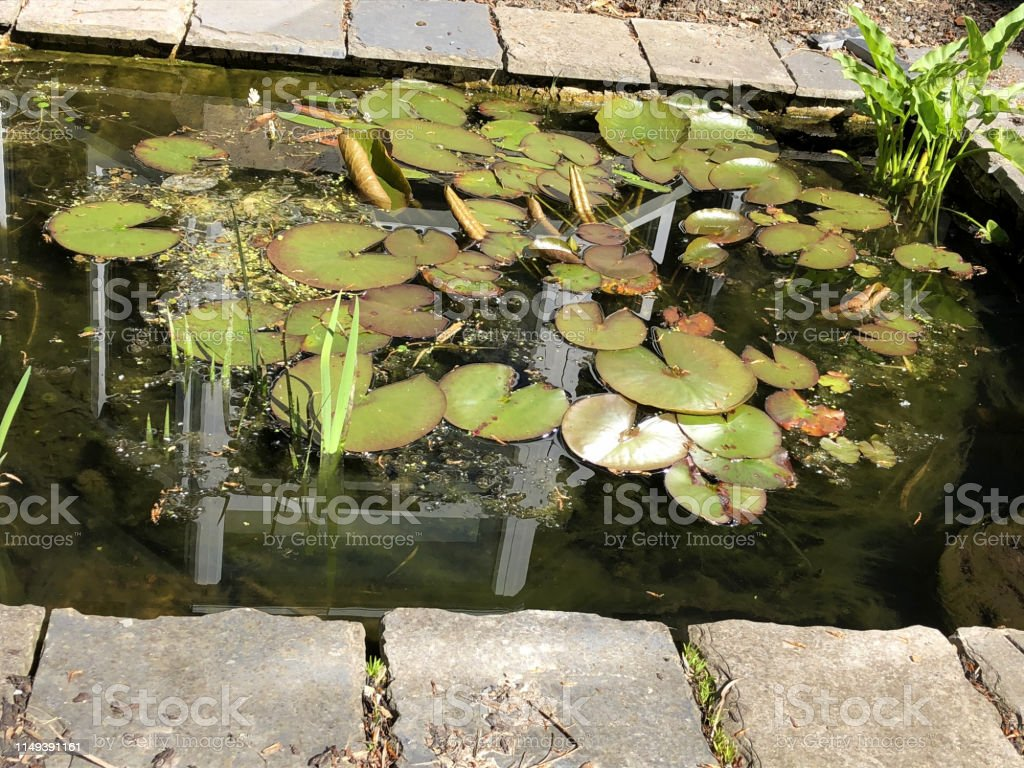 Exceptionnel Image Of Rectangular Garden Pond In Sun With Goldfish Water ...
