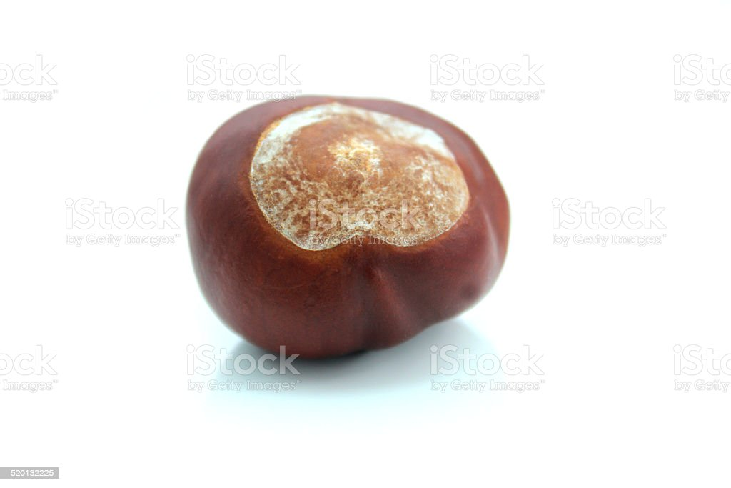 Image of ripe brown conker, shiny horse chestnut seed / nut stock photo
