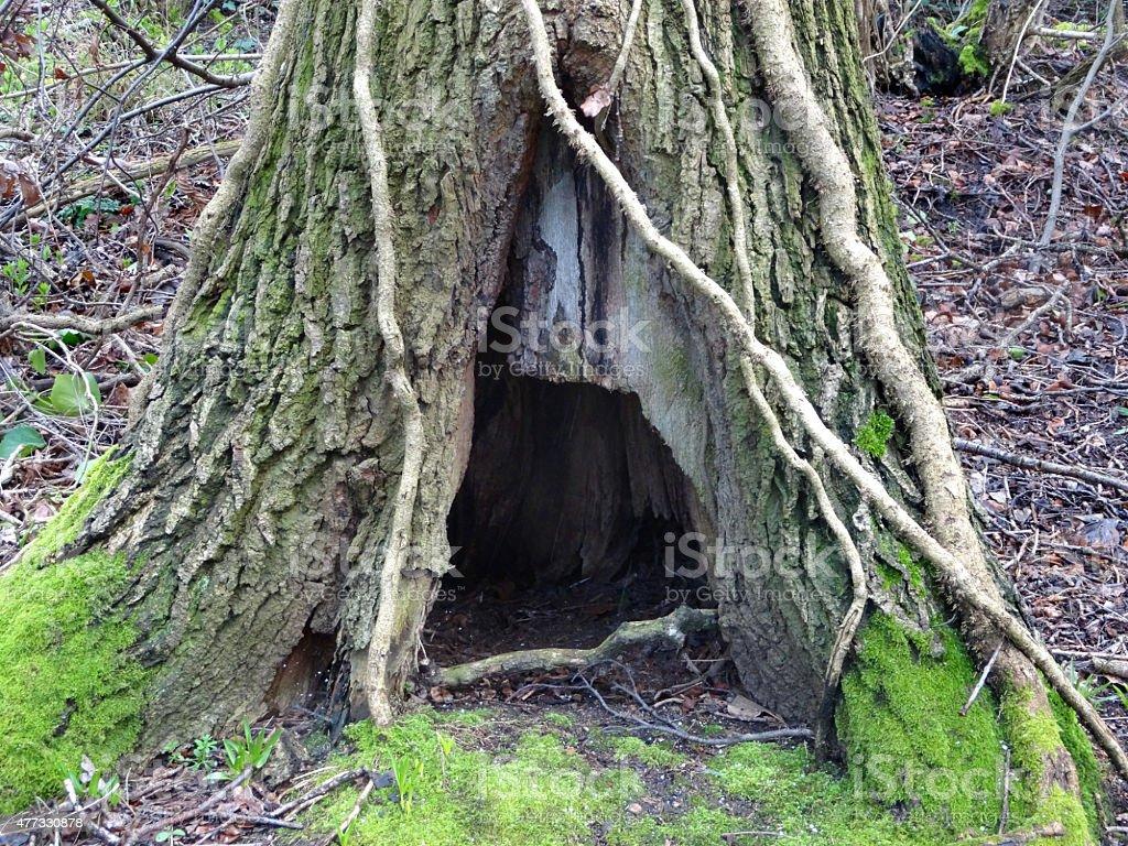 Captivating Image Of Rotting Tree Trunk Hole / Archway, Woodland Hobbit House  Royalty Free Stock