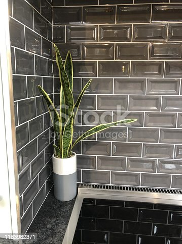 Stock photo of glossy grey brick effect tiling / brick wall tiles and sansevieria house plant, modern induction ceramic hob black kitchen stove electric hot plate zones and cooker hood extractor fan, touch control knobs, granite worktop countertop.