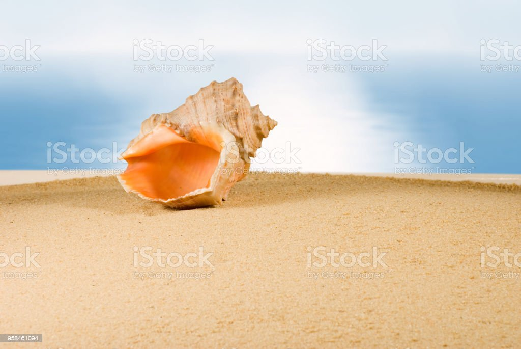image of seashell in the sand against the sea, stock photo
