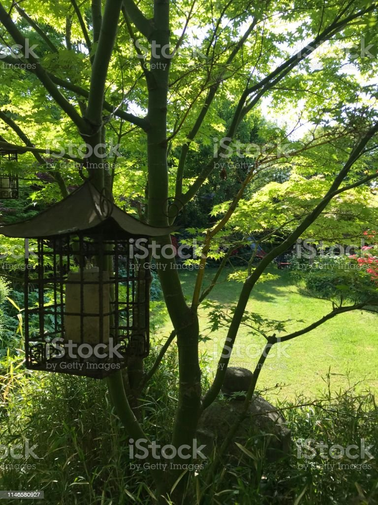 Image Of Shady Japanese Garden Acers Acer Palmatum Trees Leaves