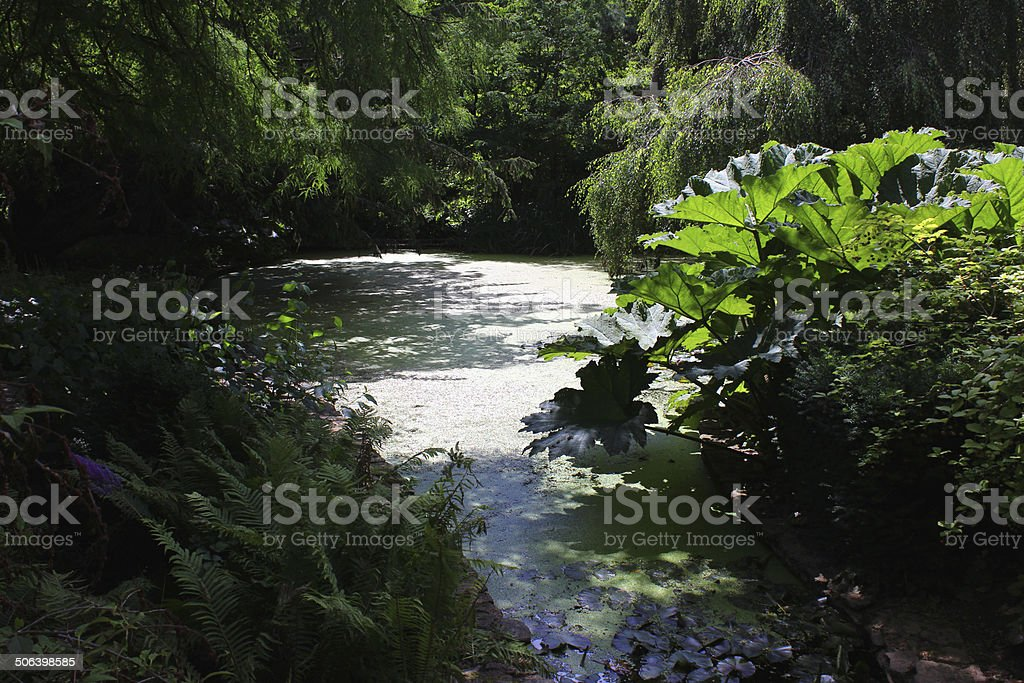 Image of shady, neglected garden pond covered in green duckweed stock photo