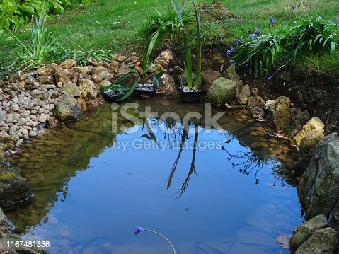 Photo showing of shallow small garden wildlife pond in garden lawn grass with PVC butyl rubber pond liner, bluebells flowers, rocks and pebbles as edging, marginal plants, gravel sloping edge for wildlife, amphibians, frogs, hedgehogs drowning small wild animals