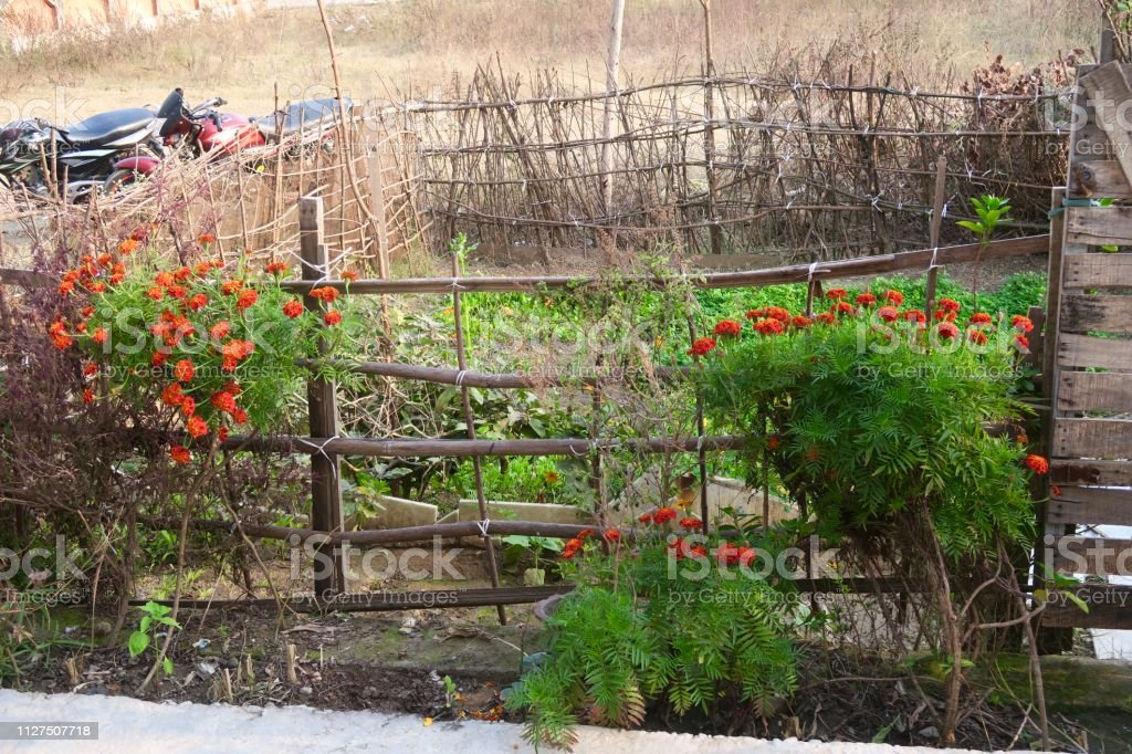 Image Of Small Flower Garden With Orange And Red French Marigolds