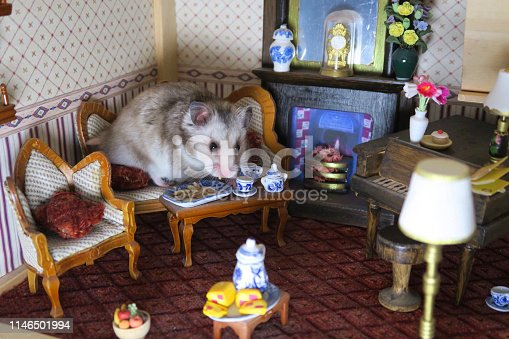 Stock photo of hamster in Victorian dolls house lounge room, dwarf Syrian hamster sitting on sofa fireplace, eating sunflower seeds, toy china plates, tea cups, miniature toy dook furniture.