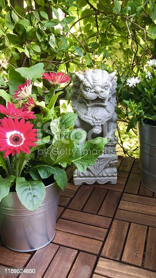 Stock photo of small patio garden with parquet wooden decking timber squares tiles, granite stone Imperial Chinese guardian fu lion / fu foo dog statue with green plants, daisy flowers and flowering red gerbera plant in silver zinc bucket pot, honeysuckle vine