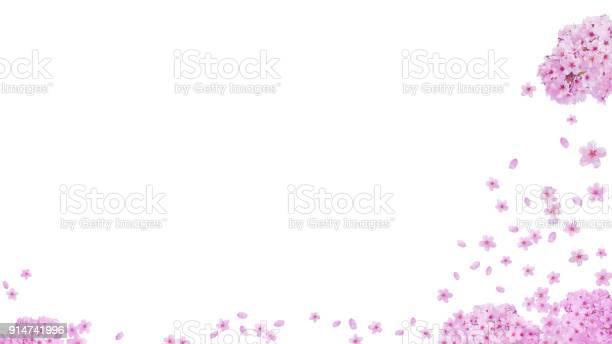 Image of spring cherry blossoms and the petals background picture id914741996?b=1&k=6&m=914741996&s=612x612&h=xyrww2ssbohgxp5fzgki cwnlb4v2rzfkoh jlxcski=