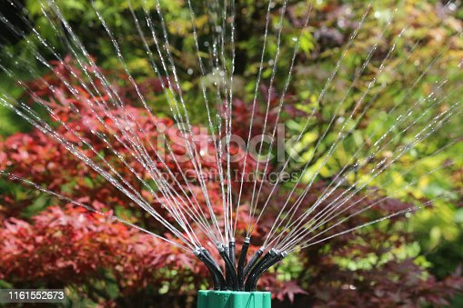 Stock photo of sprinkler jets squirting and spraying water in garden, gardening watering plants and lawn grass with bendy flexible jets pointing water showers, with blurred green and red foliage background, irrigation system and wet water droplets