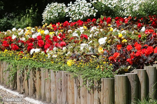 Stock photo of raised summer garden bed planted with annual flowers and bedding with raised bed log roll edging and timber fence posts plants by lawn grass turf, red and white begonias, marigolds, daisies, trailing flowering plants hanging baskets