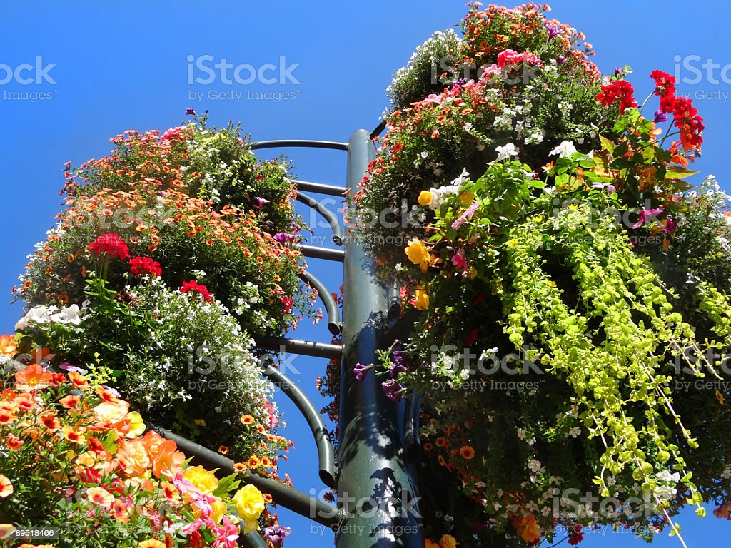 Image of summer hanging baskets with colourful annual flowers, looking-up stock photo