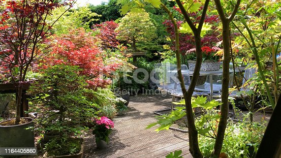 Stock photo of sunny summer back yard garden decking timber, grooved wooden deck dining area, Kalanchoe flowers on glass patio table and perspex chairs, bonsai tree Japanese maples