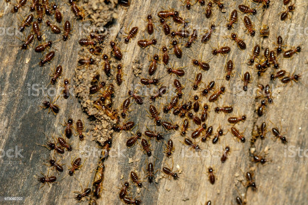 Image of termites are on stumps. Insect. Animal. stock photo