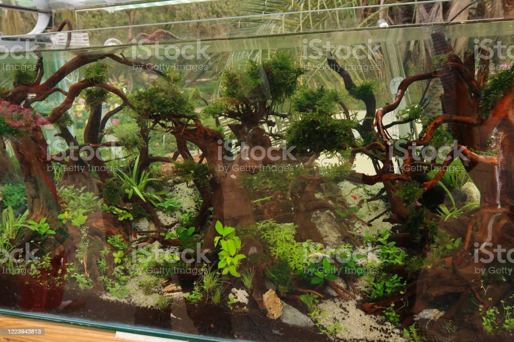 Image Of Tropical Aquarium Fish Tank With Live Aquatic Plants And Bogwood Aquascape In Outdoor Glass Fish Tank Stock Photo Download Image Now Istock