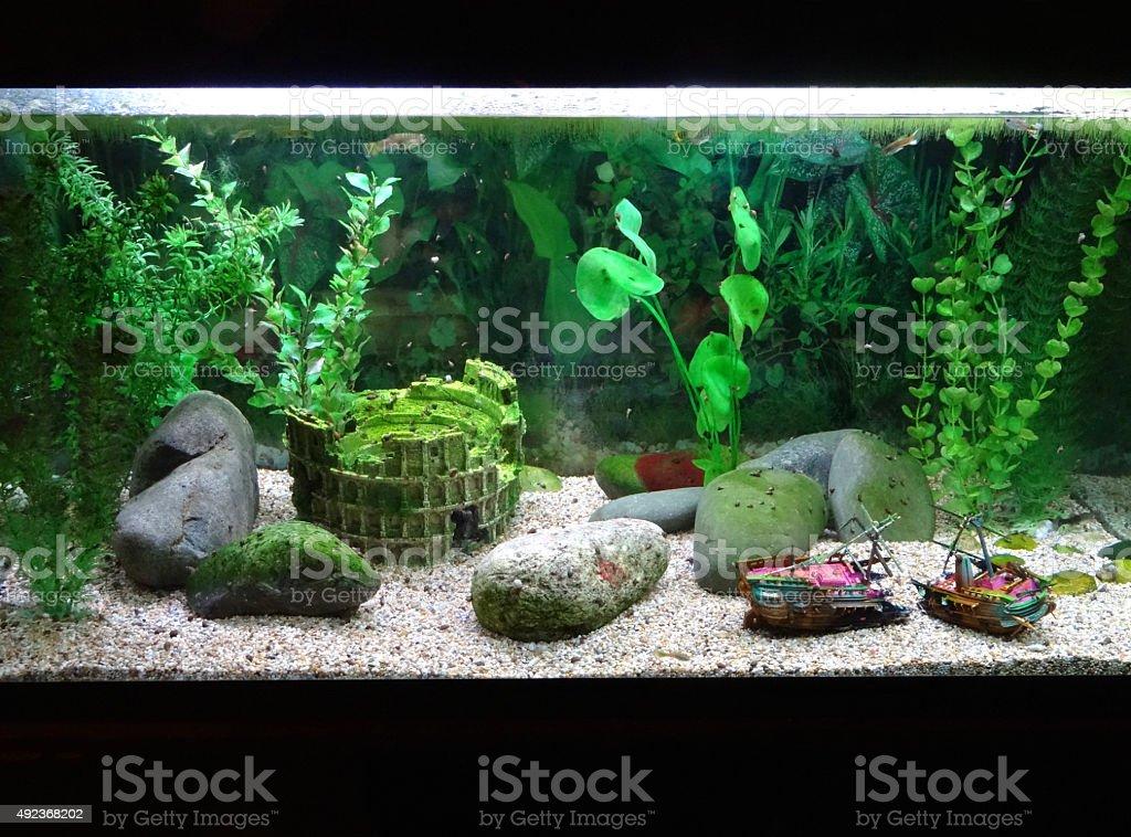 Image of tropical aquarium fish tank with snails, shipwreck, ornaments stock photo