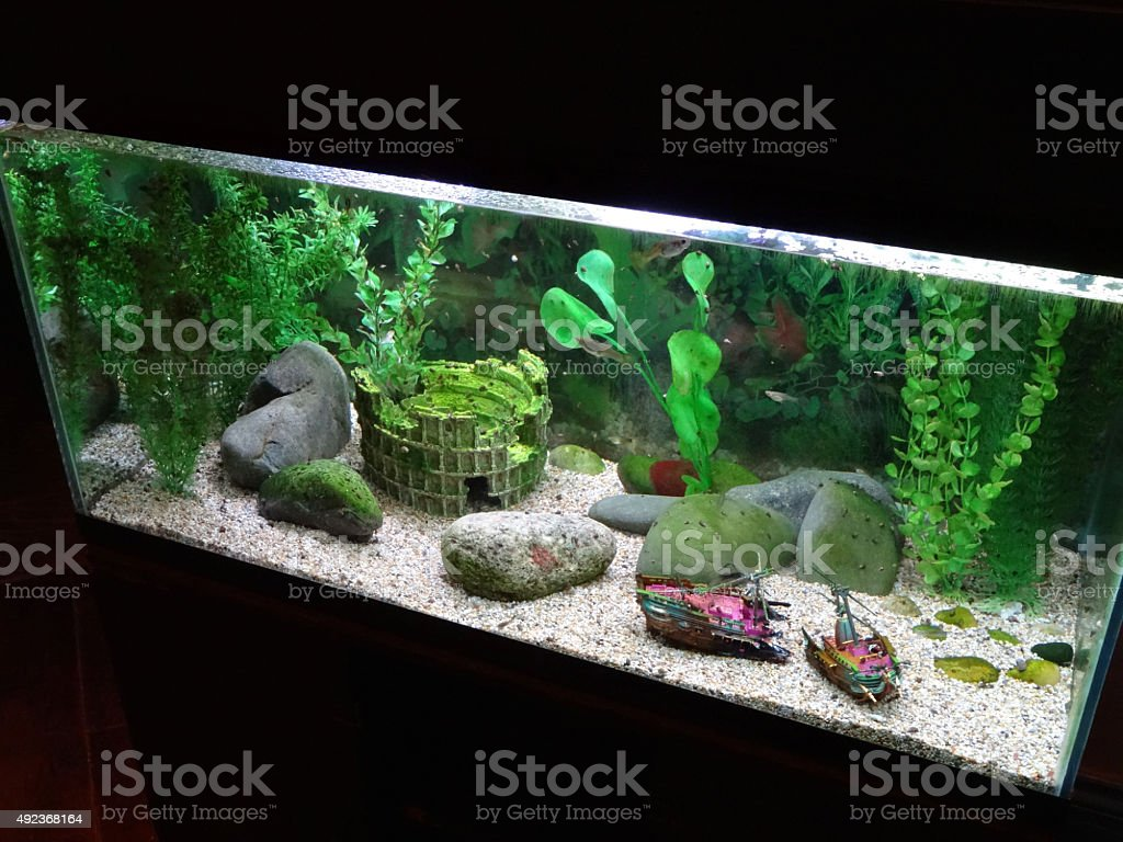 image of tropical fish tank with aquarium ornaments plants snails royaltyfree stock