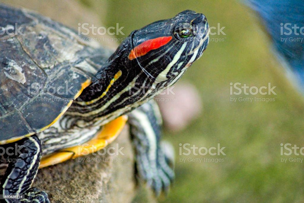 image of turtle close-up stock photo