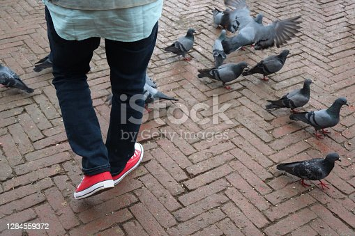 Stock photo showing flock of feral wild pigeons pecking around the feet of an unrecognisable person walking on pedestrian walkway startling the birds into flight. The pigeons are scavenging leftover crumbs, crisps, fries and any other goodies that have fallen onto the floor.
