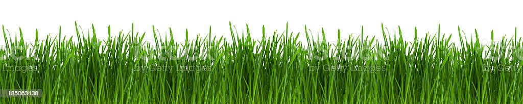 Image of very green and healthy looking grass royalty-free stock photo
