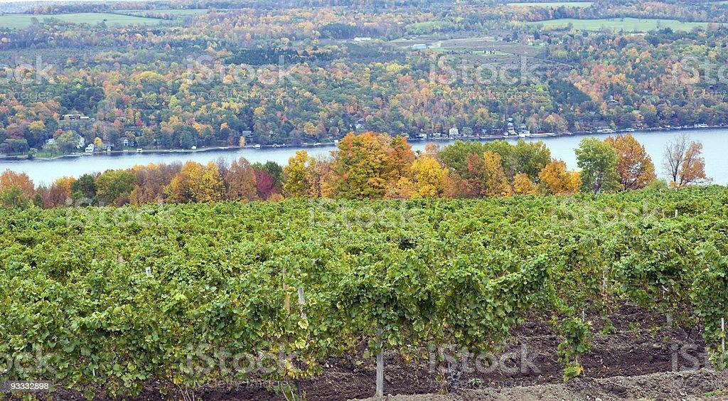 DSLR image of Vineyard on Keuka Lake stock photo