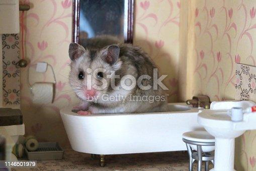 Stock photo of grey hamster in wooden Victorian dolls house bathroom, Syrian hamster sitting in washroom bathtub with dollshouse toilet, miniature doll room, alert ears, healthy whiskers.