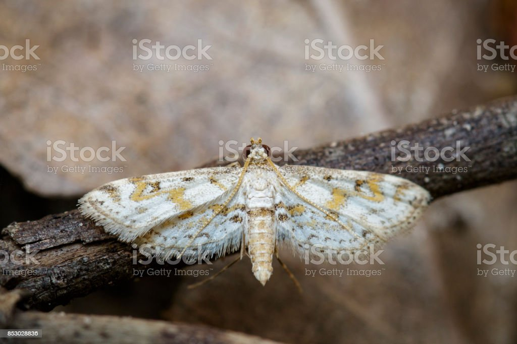 Image of white butterfly(Moth) on branch. Insect. Animal. stock photo