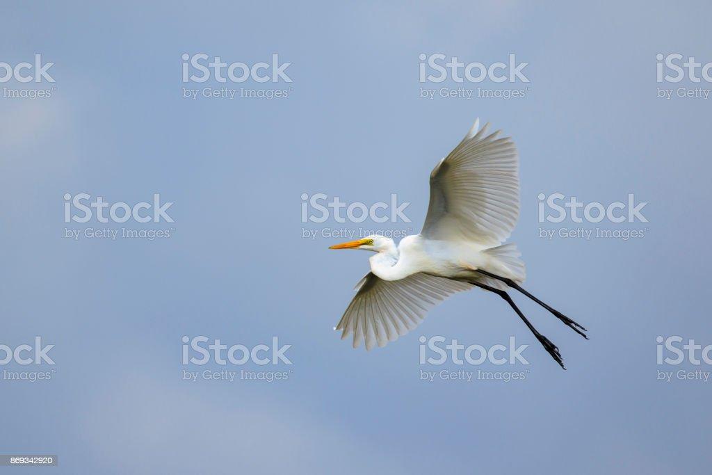 Image of white egret flying in the sky. Animal. white Bird. stock photo