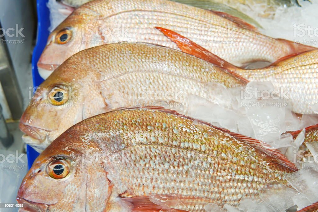 Image of whole snapper sell at fish market. Close up snapper fish in detail with fish scale.Selective focus on snapper display can use as background. stock photo