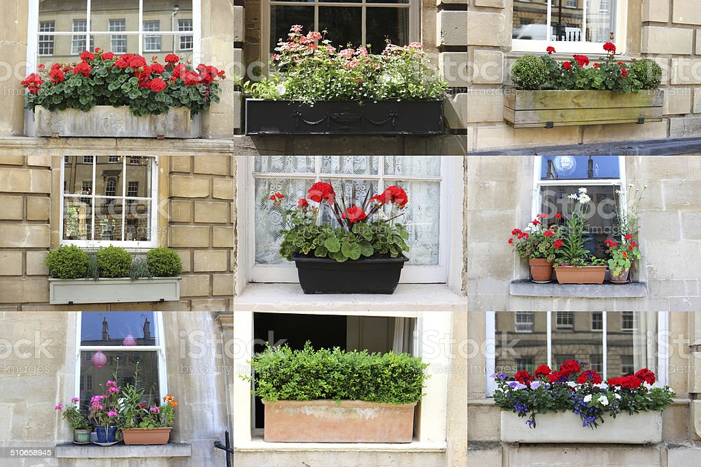 Montage / collage of windowbox photos, showing a variety of different...