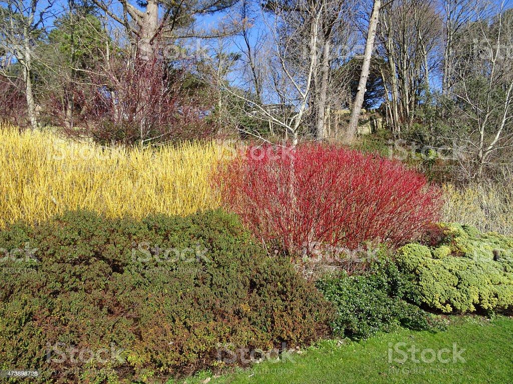 imagen del jard n de invierno rojo y amarillo dogwood. Black Bedroom Furniture Sets. Home Design Ideas