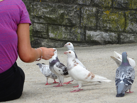 Photo showing a woman feeding a group of wild pigeons (often referred to as feral domestic pigeons).  She is hand-feeding these wild birds with crumbs of bread, leftover from her sandwich.  The hungry, tame birds are flying down and begging for the food, pecking it from her fingers.