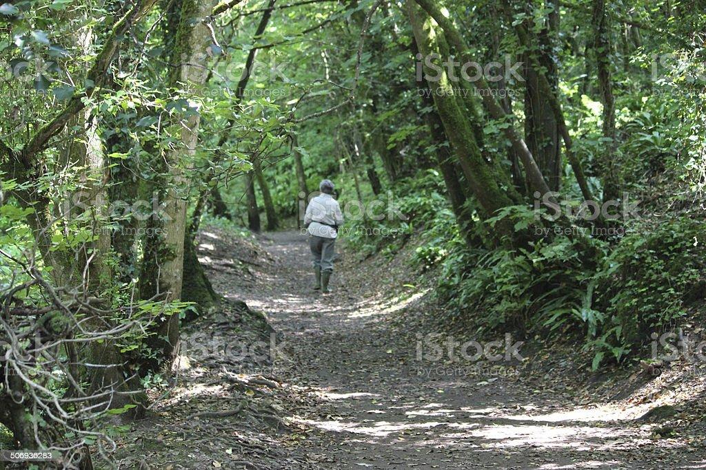 Image of woman walking along woodland path in dappled shade stock photo