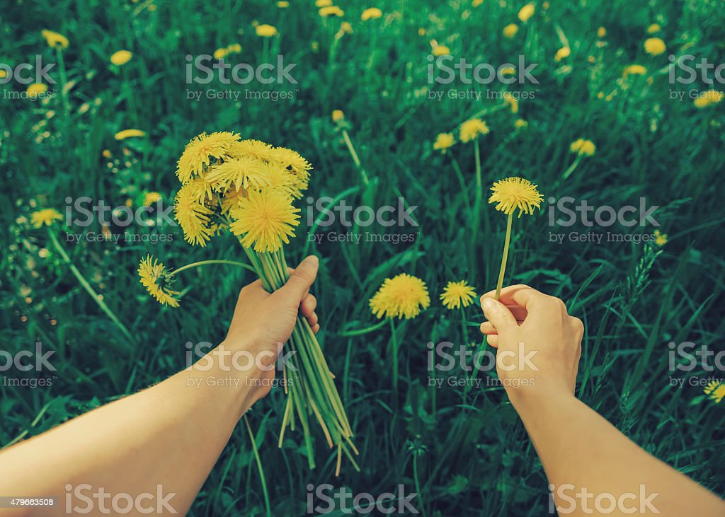 POV image of woman with dandelions stock photo